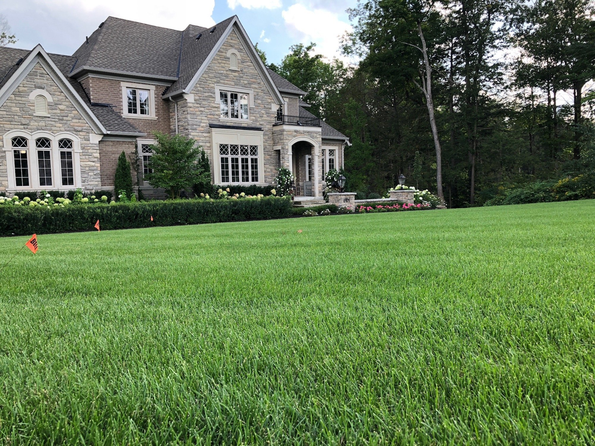 Opinion Here S How To Have The Best Lawn On Block